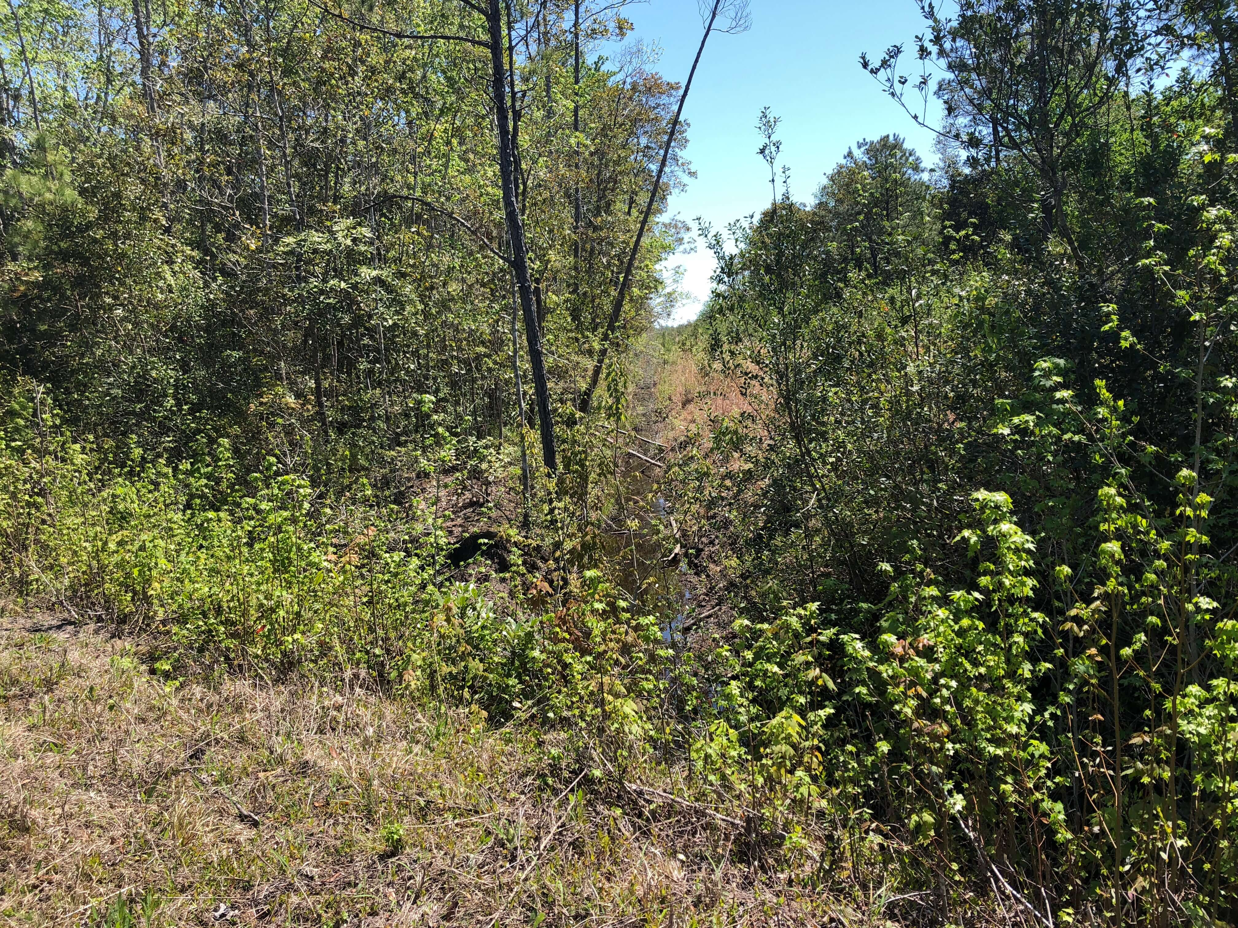 Timber/Hunting Tract For Sale Pamlico County, NC