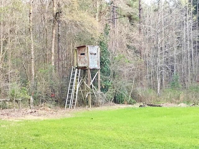 125 Acres Timberland Bordering National Forest, Amite Co, MS