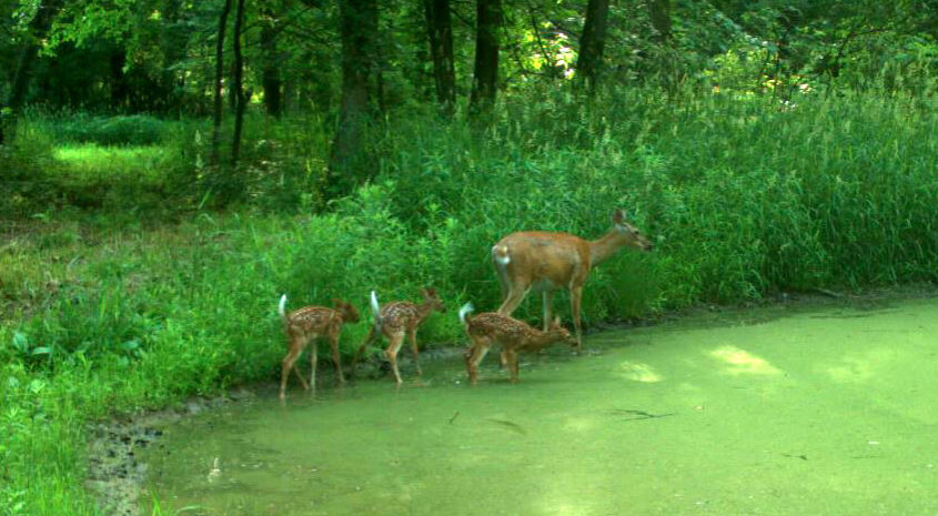 Small Property Habitat Management Can Pay Big Dividends