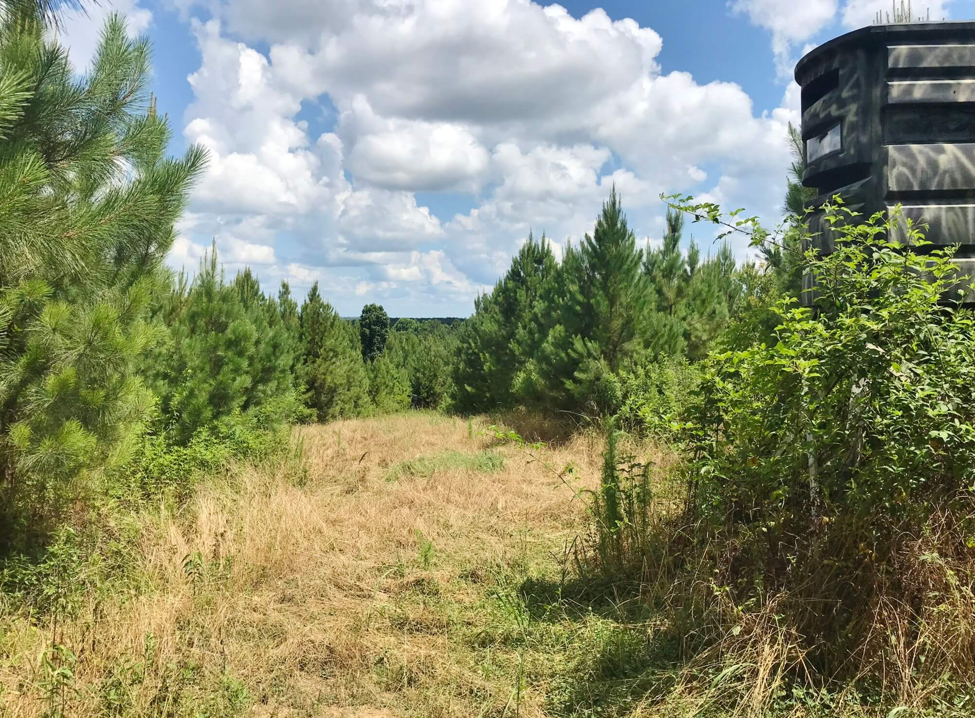 320 Acres South MS Hunting Land for Sale Franklin County, MS