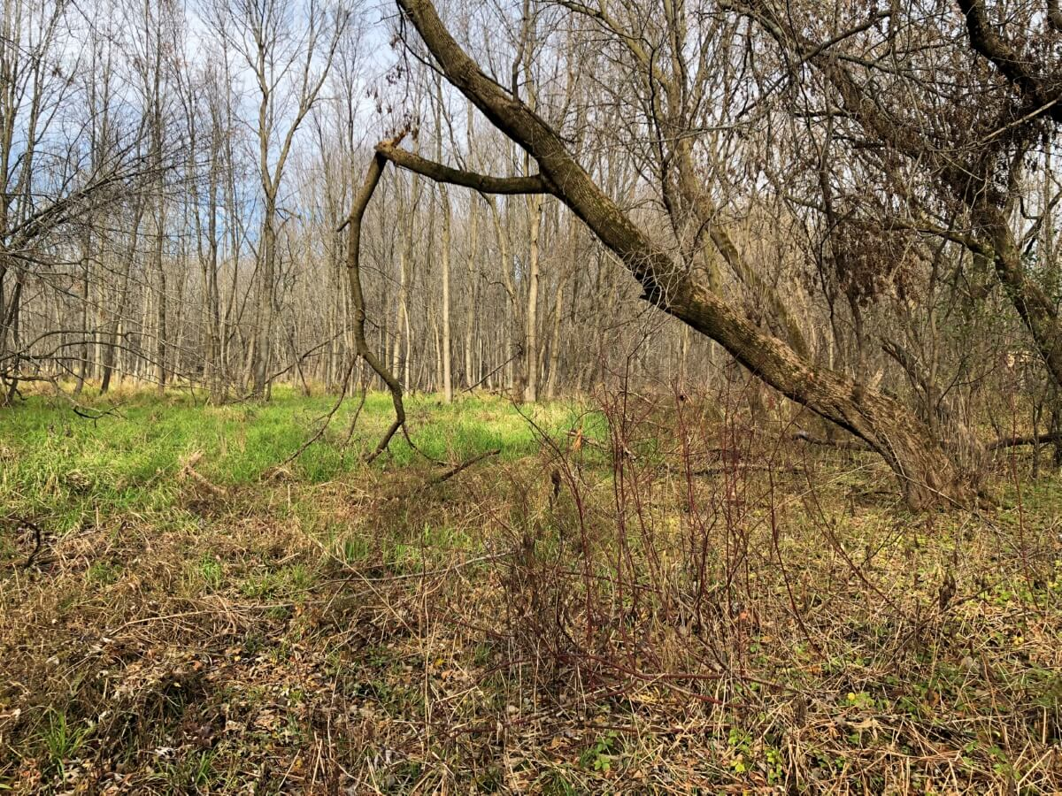 Heavily Wooded Parcel Sheboygan County, WI
