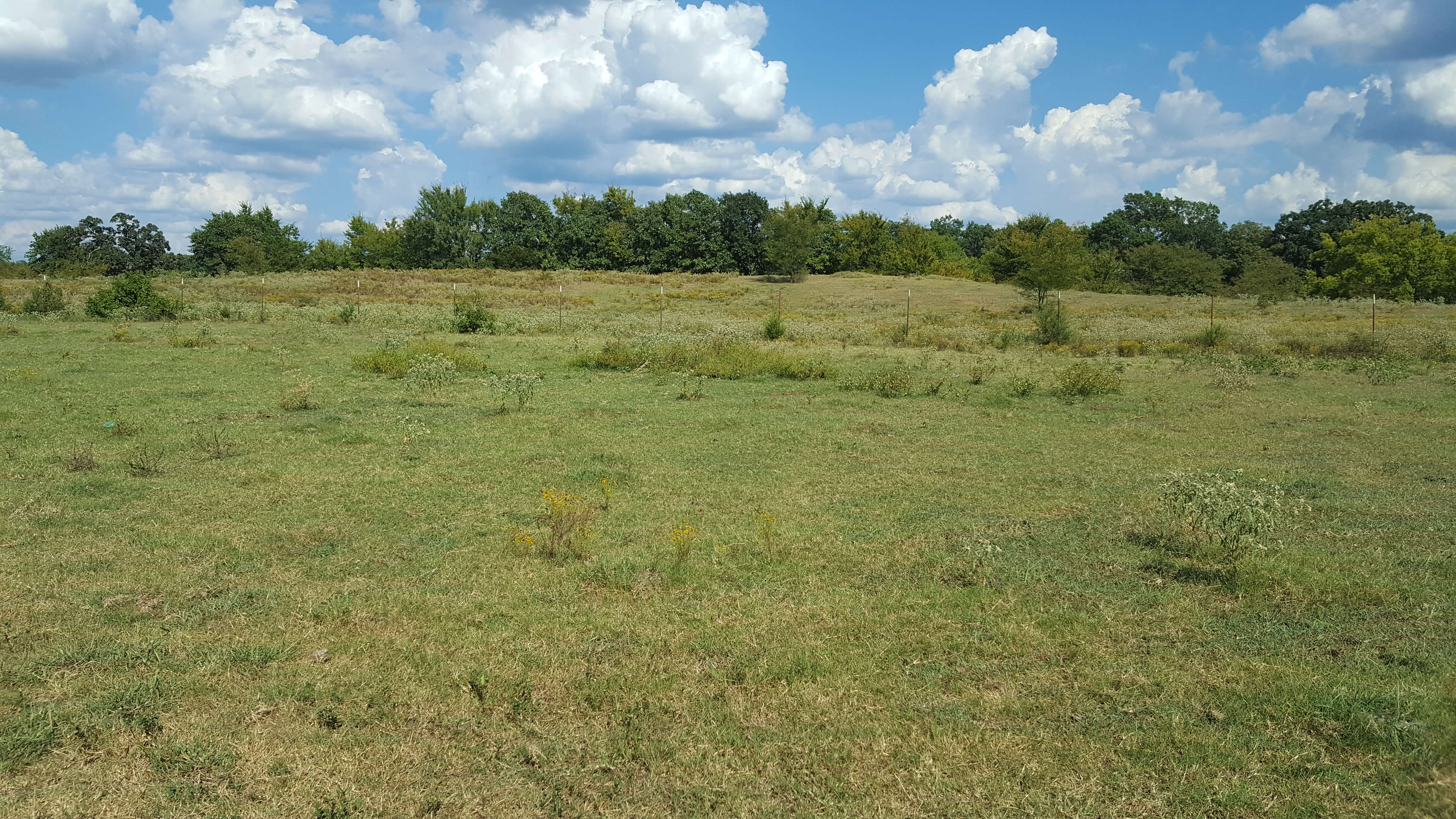 Kiamichi Ranch Land for Sale