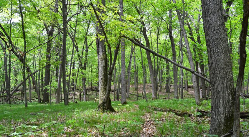 Pros & Cons of Harvesting Timber on a Hunting Tract