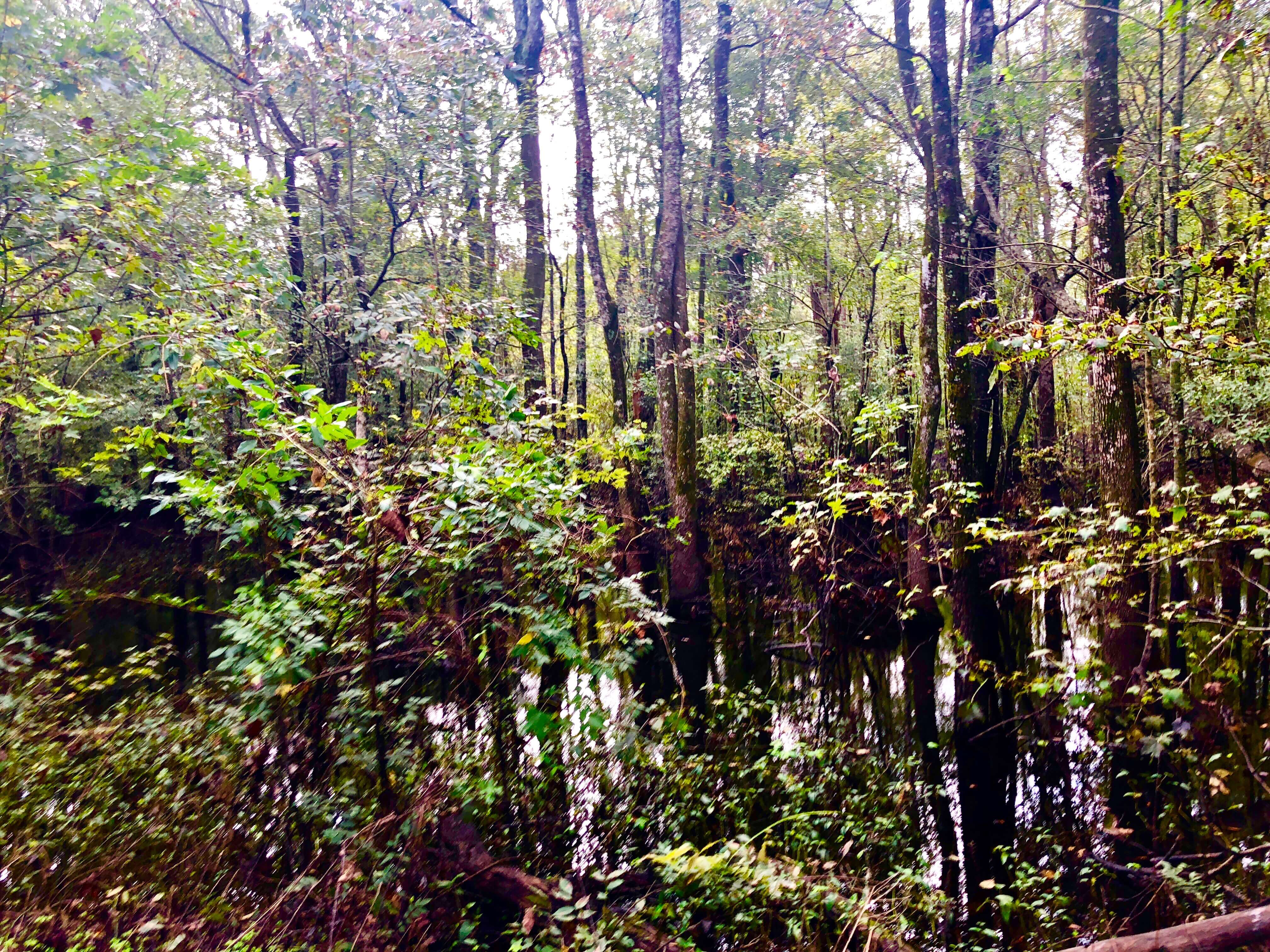 Hunting Property For Sale Craven County NC
