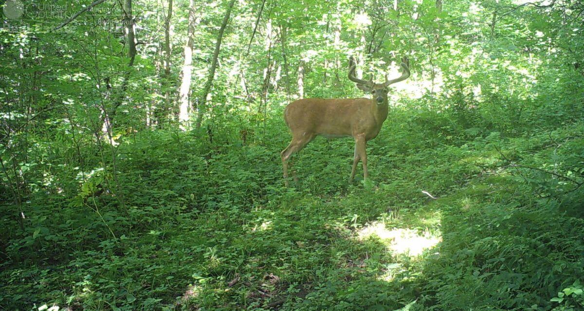Ocooch Mountains Deer Hunting Camp in Southwestern Wisconsin