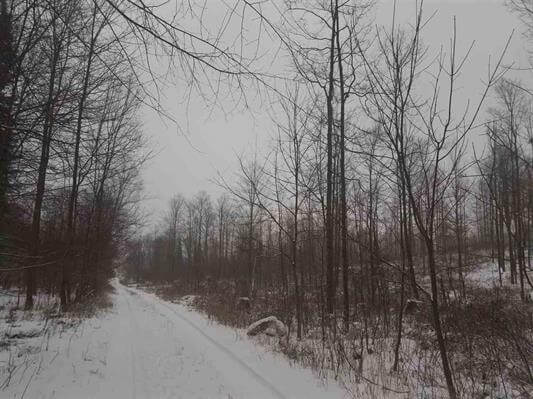 Rolling 80A of wooded land Waupaca County, WI