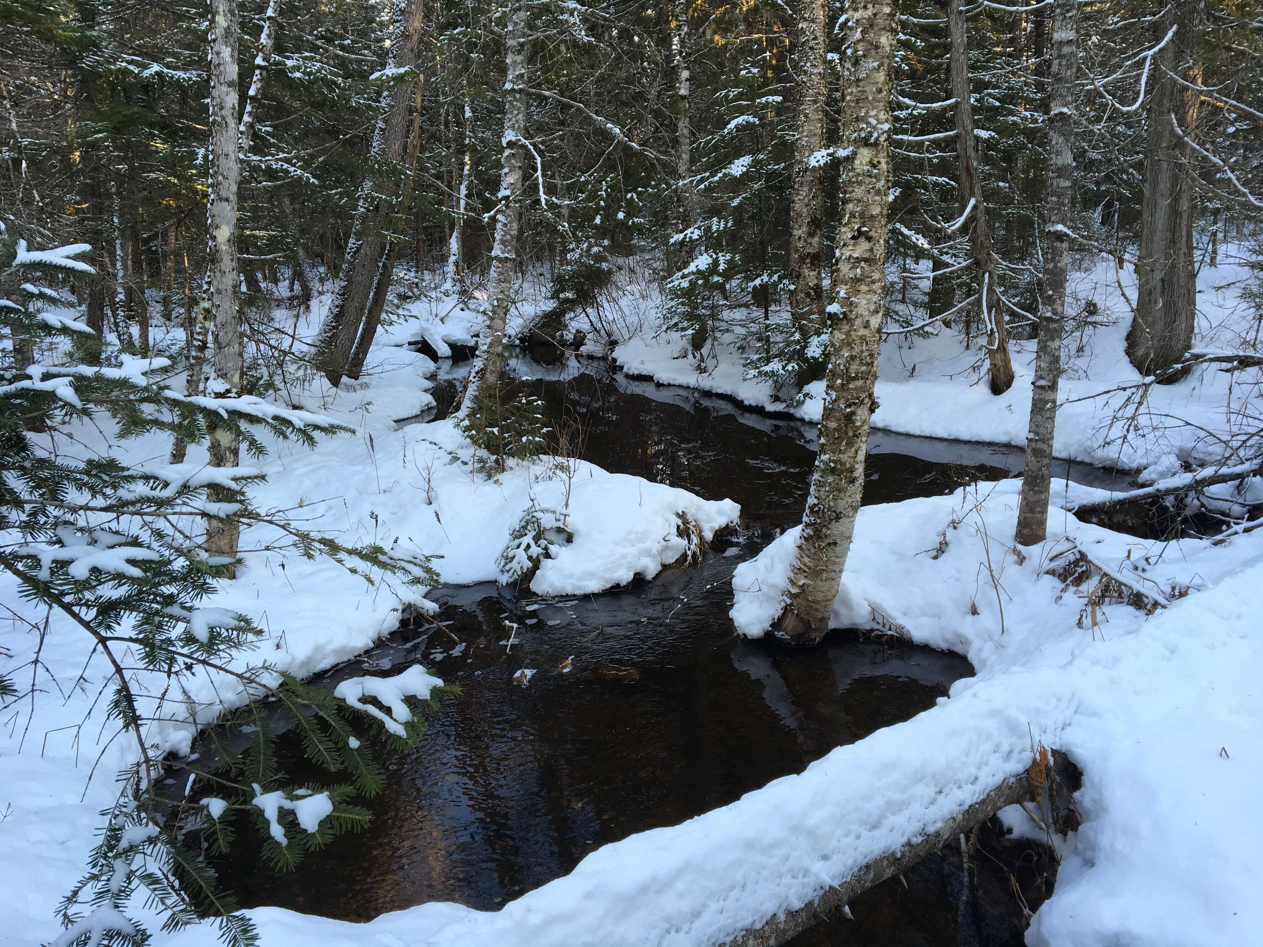 Cleaves Brook Headwaters 91.7 acres Prentiss, Maine