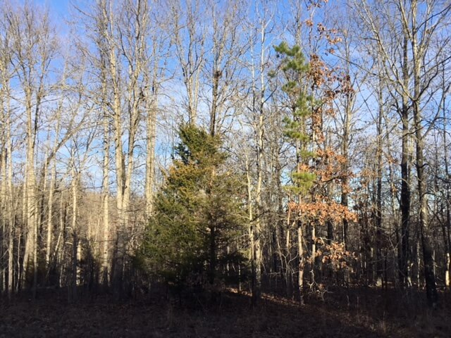 Land for Sale in the Missouri Ozarks – Secluded 20 Acres of Woods