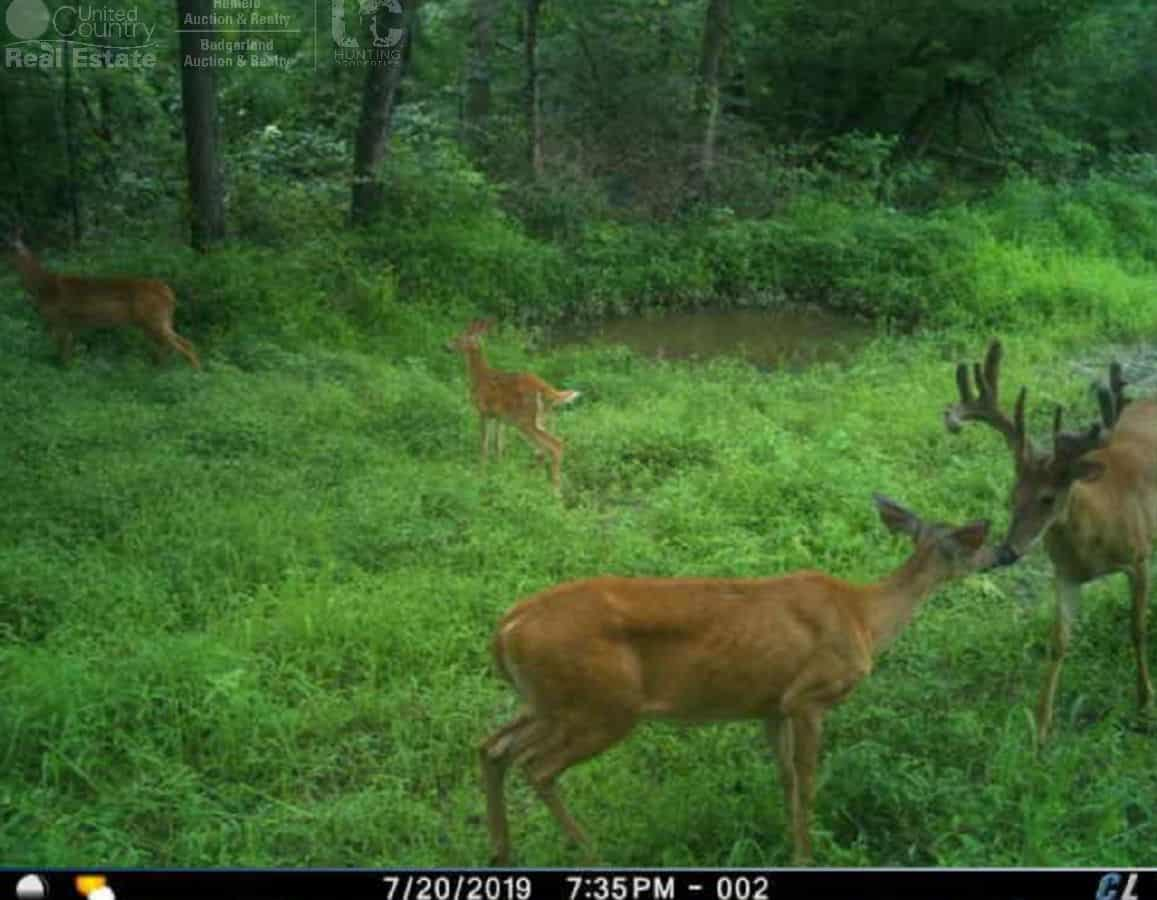 Once in a Lifetime Hunting Property in Southwestern Wisconsin