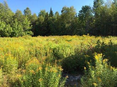 Coastal Maine Recreational Land For Sale