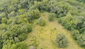 Using Grazing to Boost Your Land's Profitability & Habitat Diversity