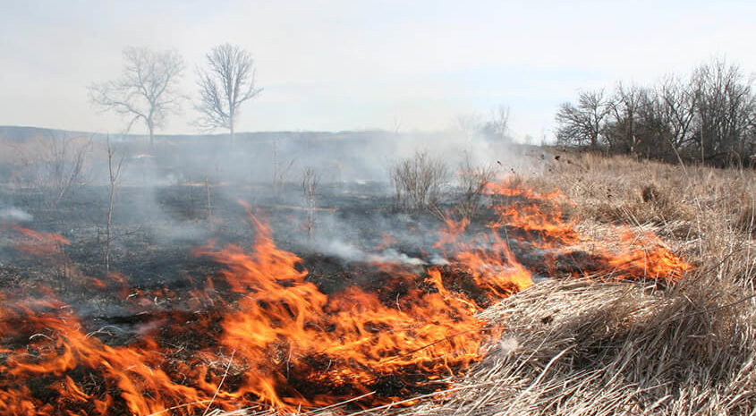 Controlled Burns Boost Hunting Land Values