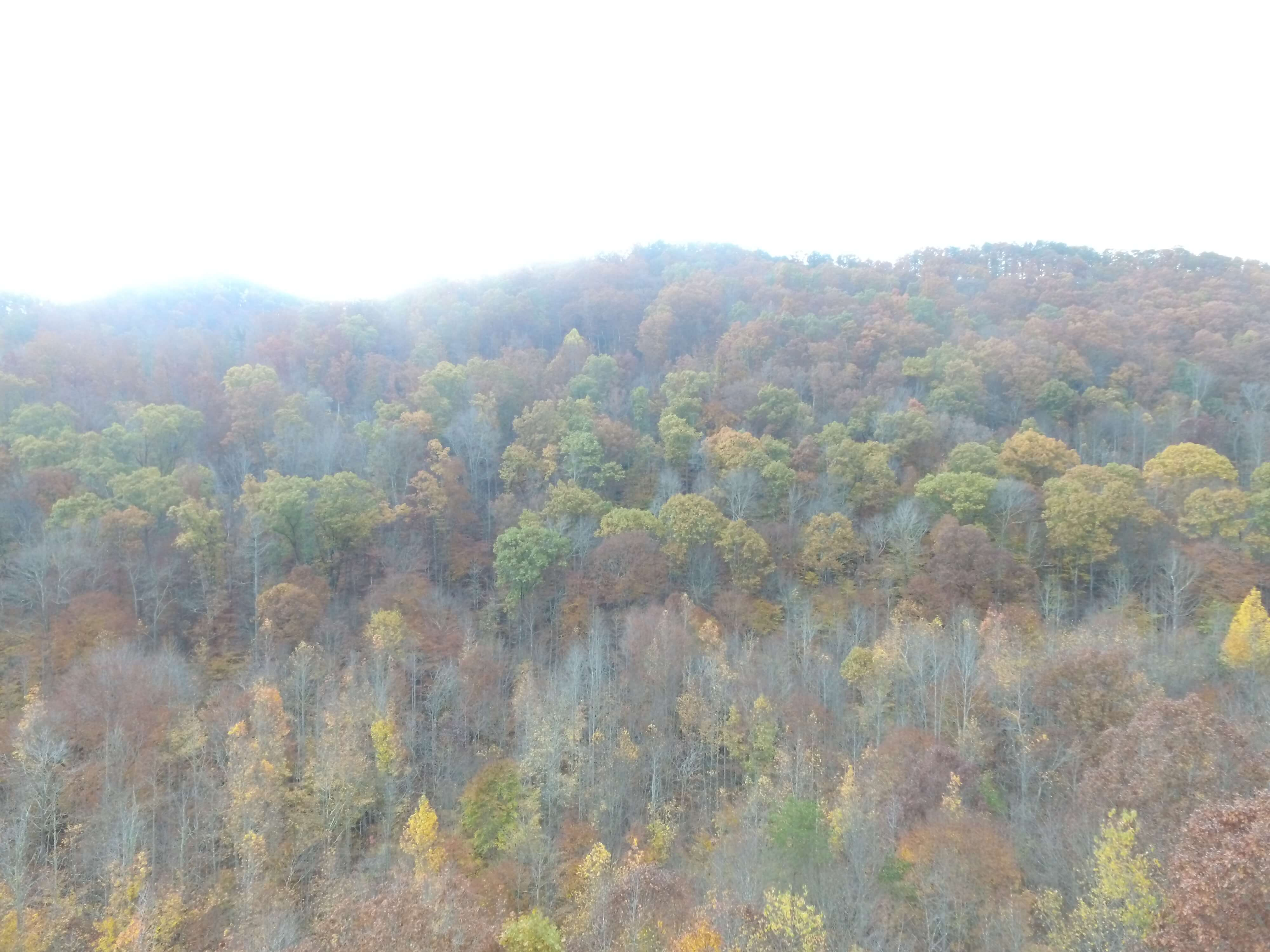East Tennessee Wood Land For Sale