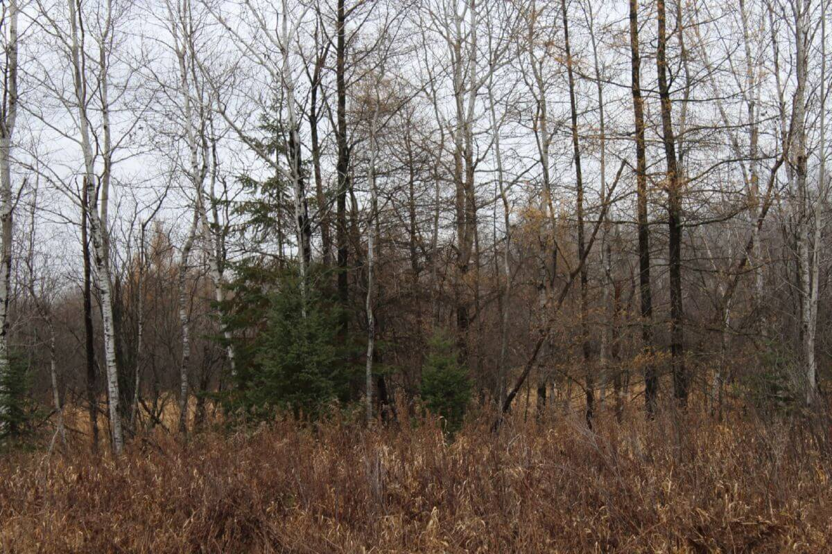 Great Mix of Ag Land and Hunting Land Taylor County WI