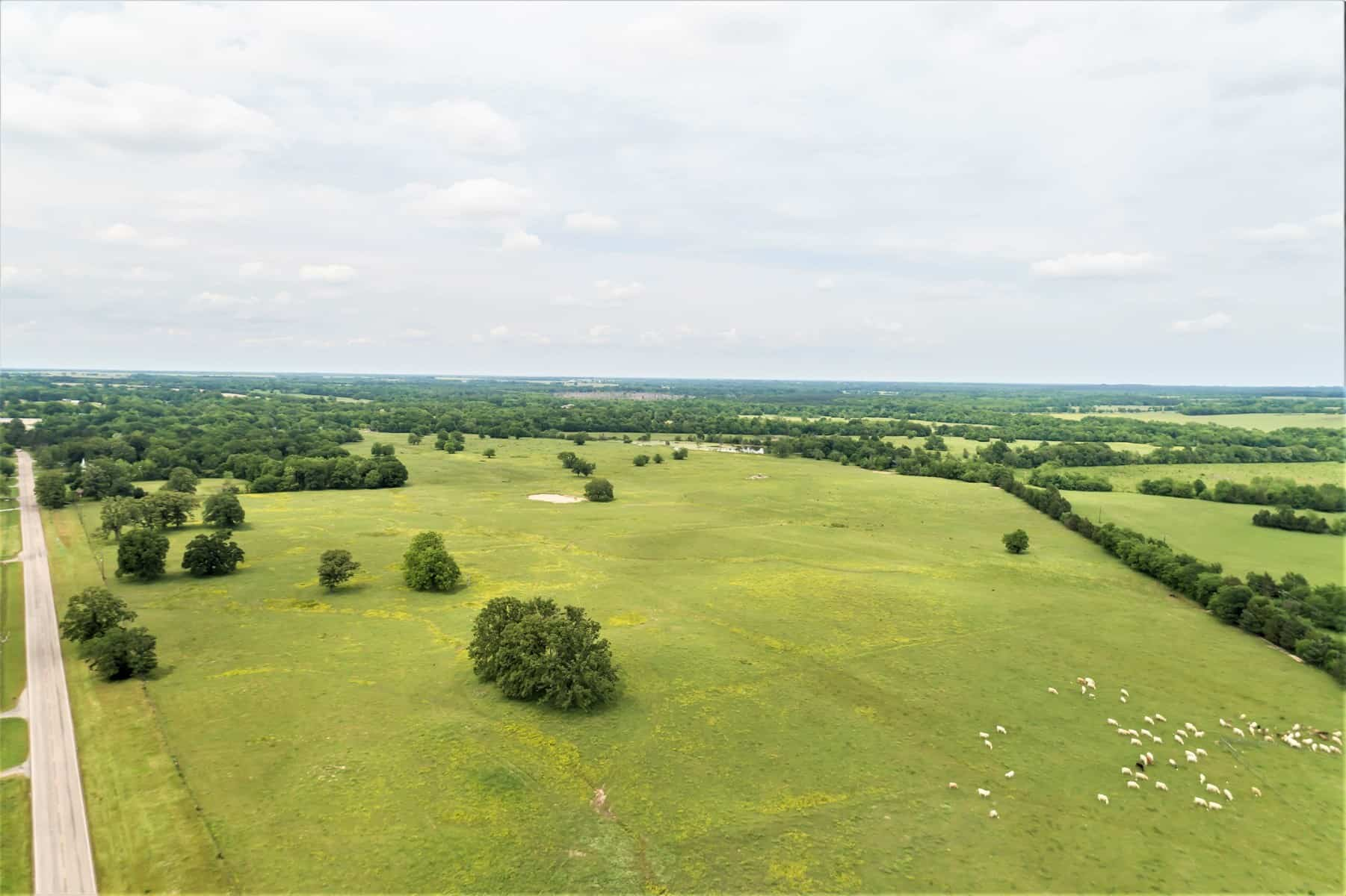 Cattle Ranch and Hunting Land for Sale|Texas