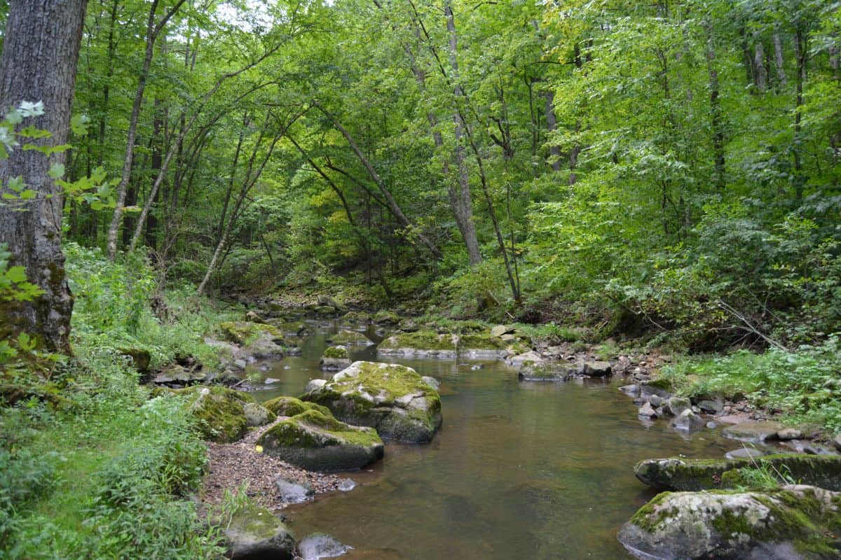 40 Acre Parcel on Otter Creek Sauk County WI