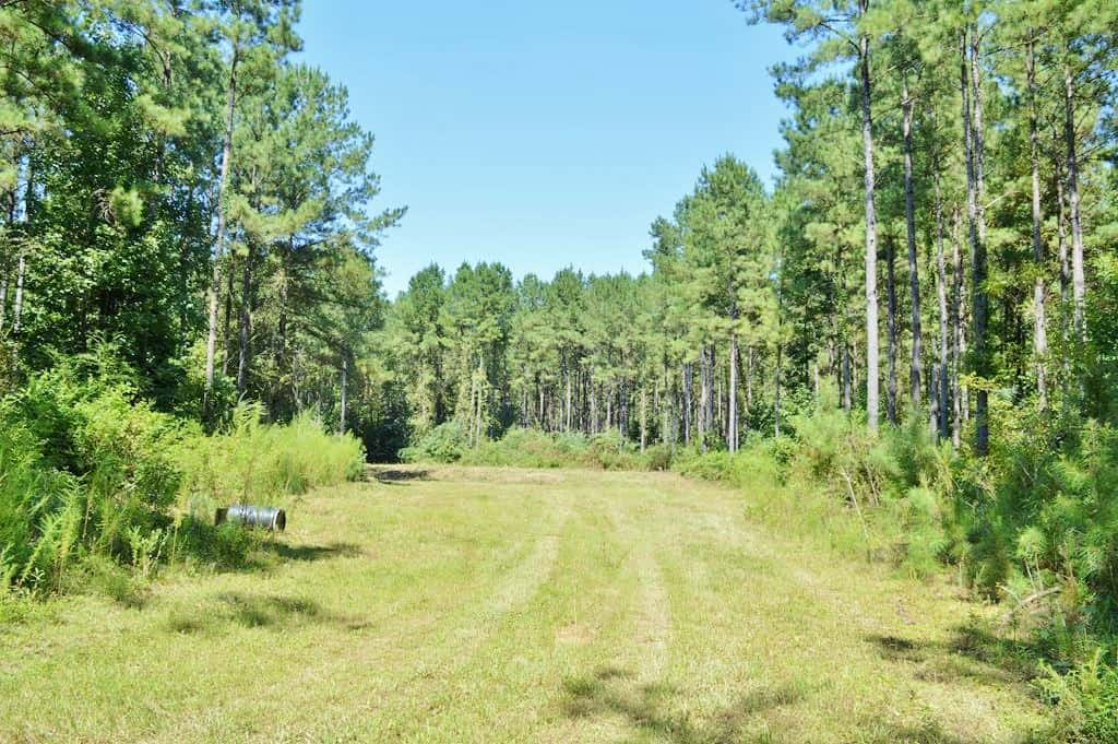 196 Acres Riverfront Hunting Timberland for Sale Pike Co, MS