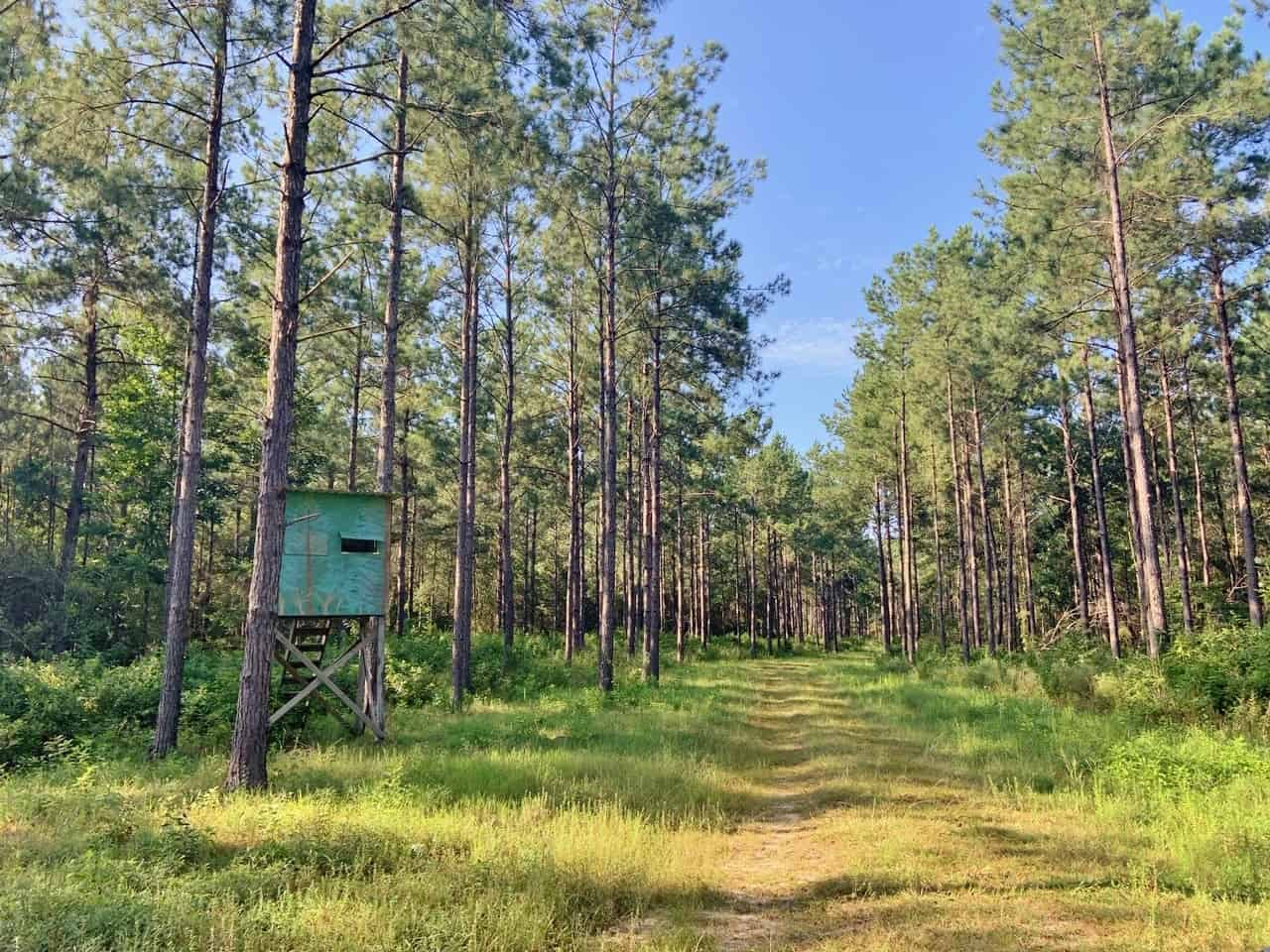 188 Acres Hunting Timber Land for Sale Pearl River Co, MS
