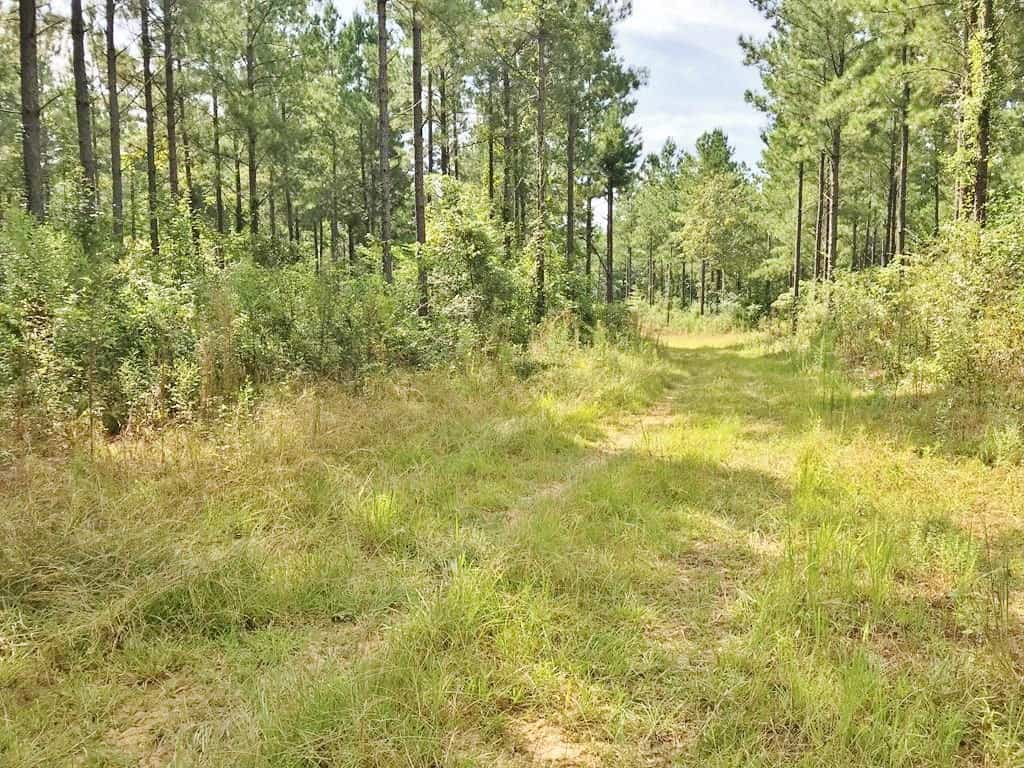 37 Acres Hunting Timberland Property for Sale South East MS