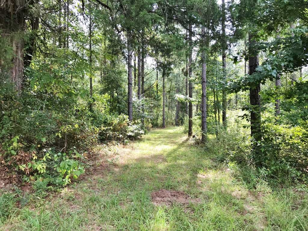 220 Acres Hunting Timberland Property for Sale Kemper Co MS