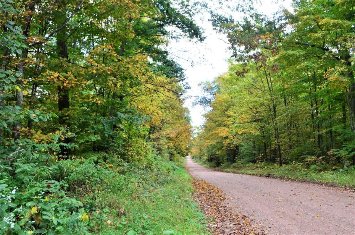 120 Acre Marathon County WI Land Auction Online Only