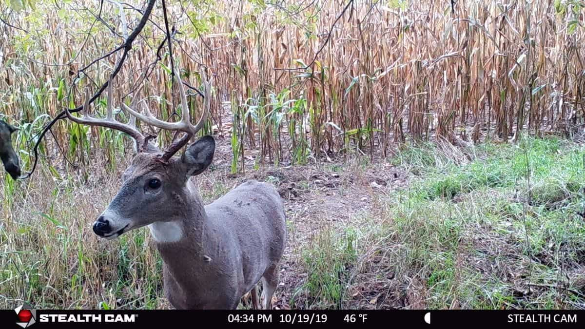 40 Acres of Hunting Land in Columbia County WI
