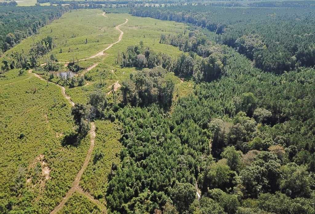 Hunting Timber Land for Sale Wilkinson County, MS