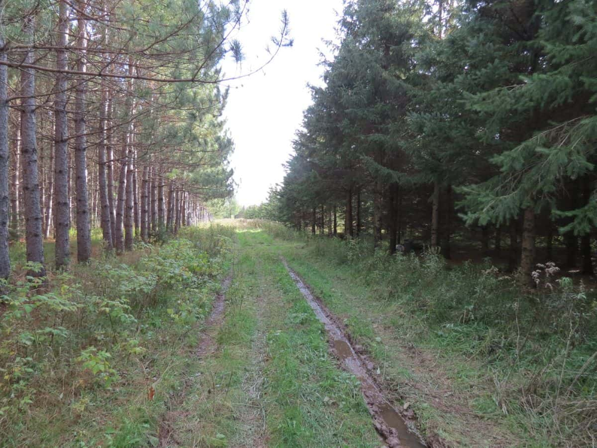 Lincoln County WI Hunting Land with Creek Frontage