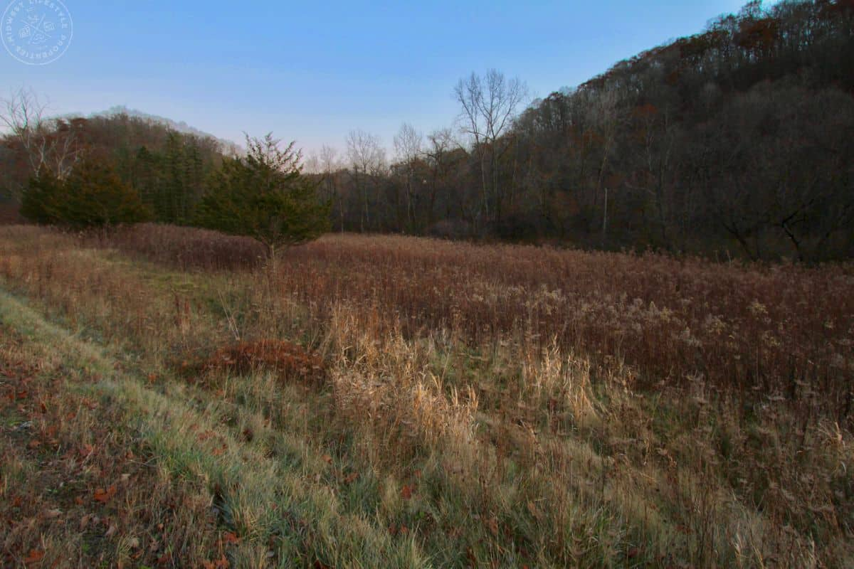 Hunting Land For Sale with Trout Stream in Southwest Wisconsin