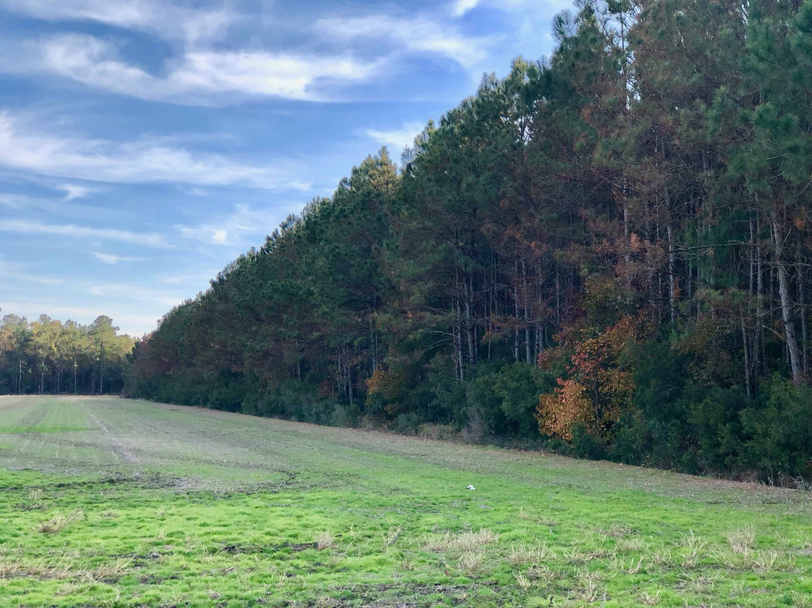 Hunting tract for sale in Hyde County, NC/Timberland