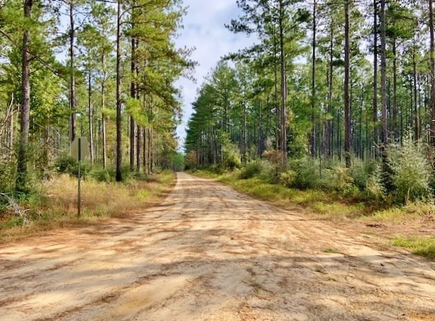 1118 Acre Timberland Investment Land for Sale George Co, MS