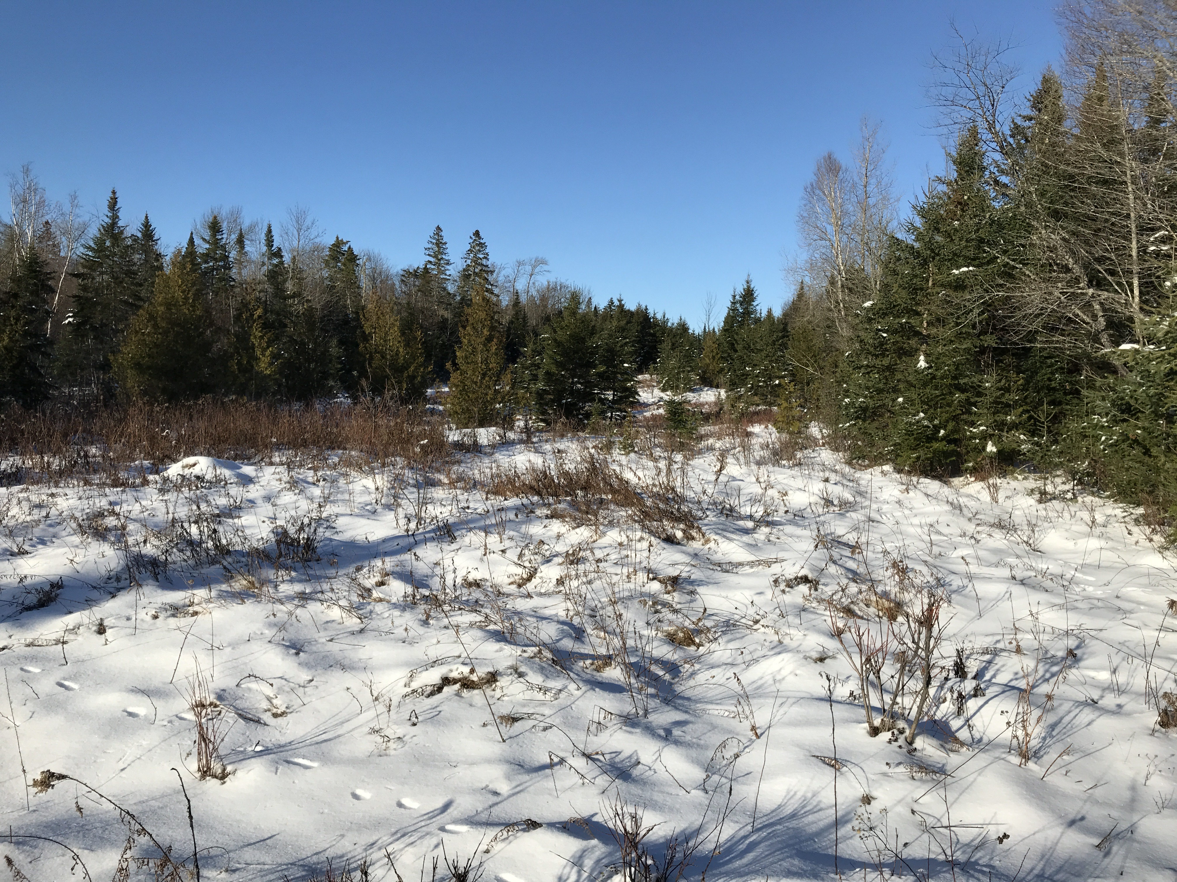 Remote 100 Acres in Northern Maine | Price $42,500