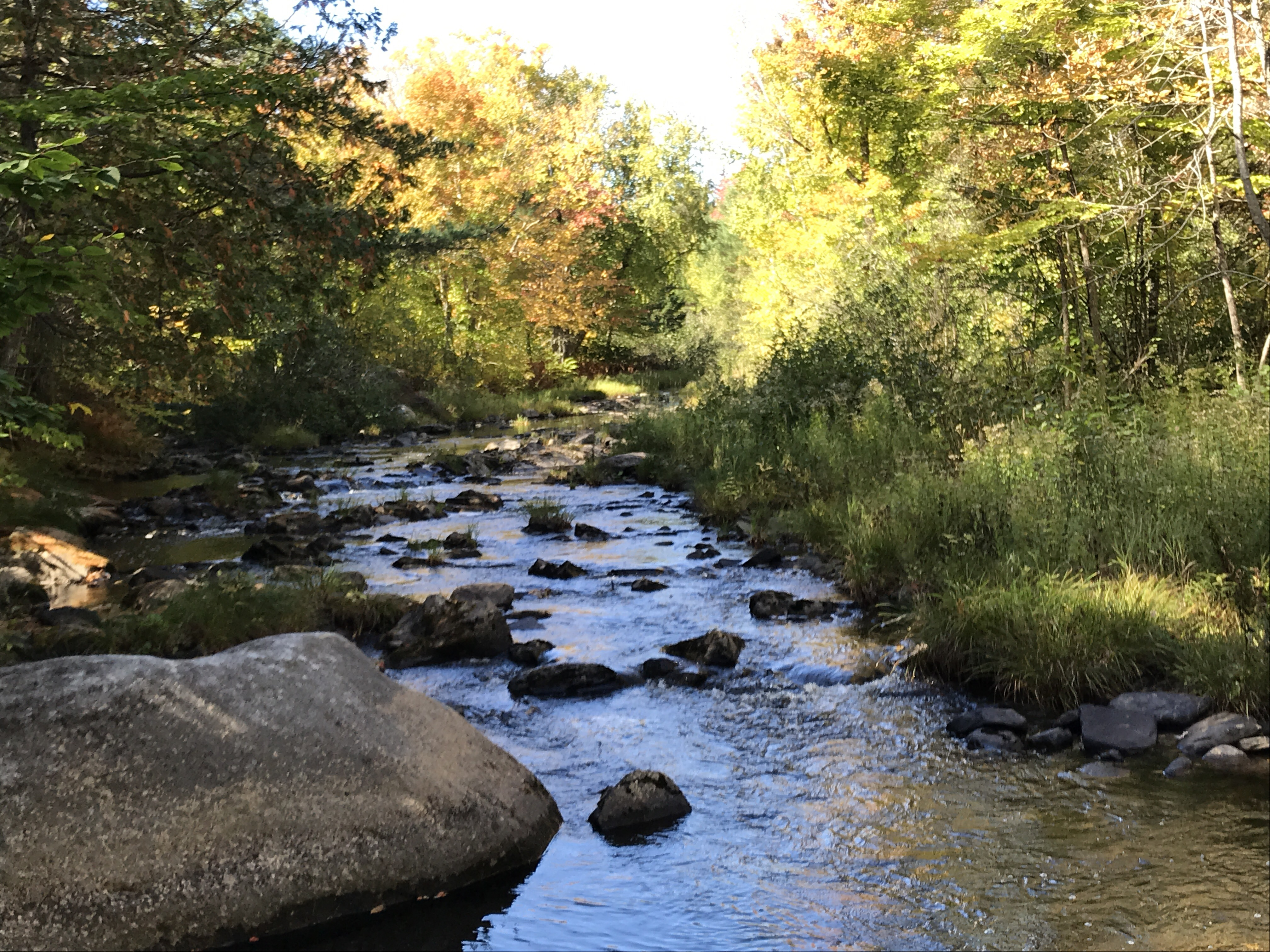 140 Acres Forest Land On Livewater Trout Stream