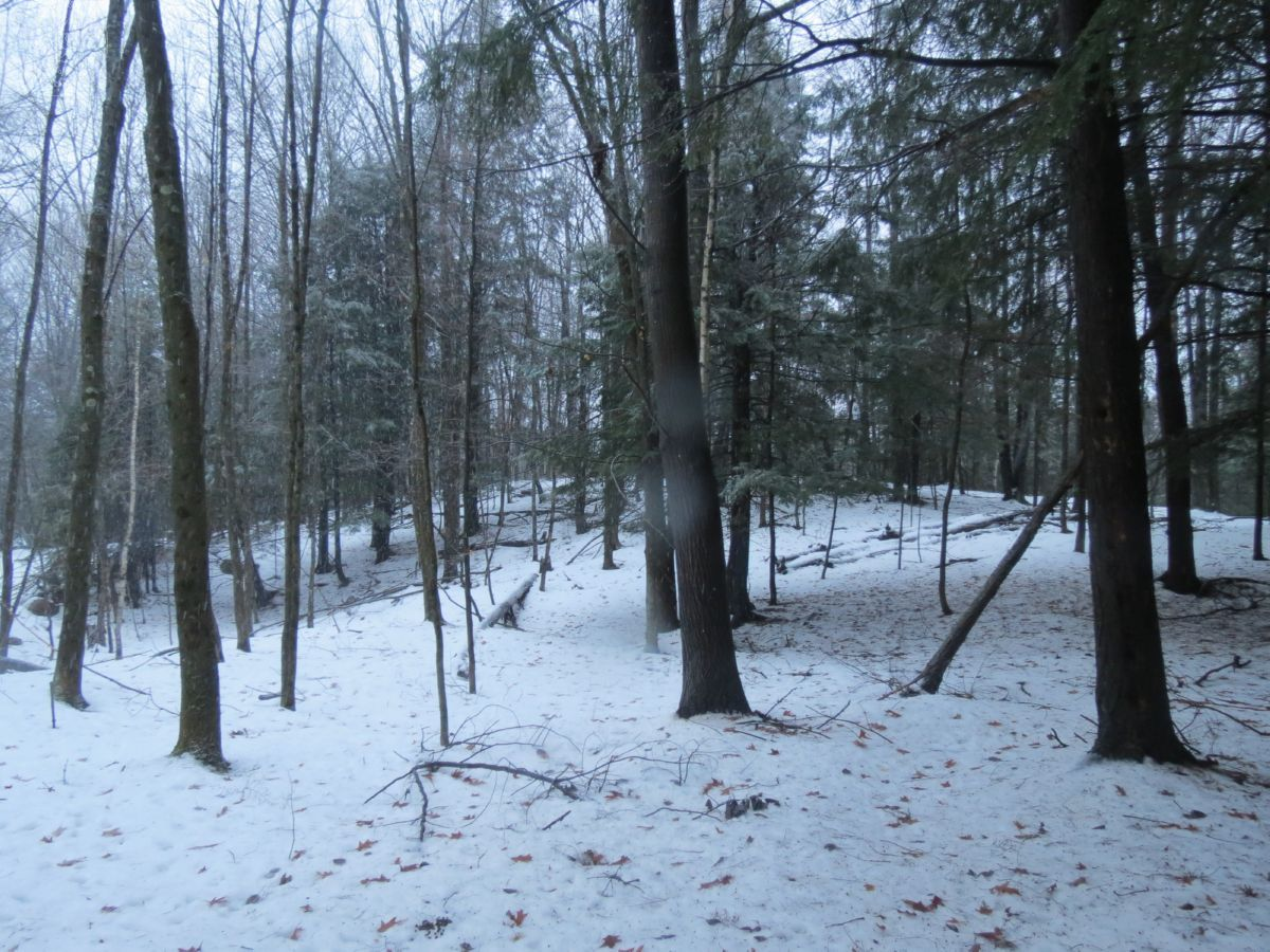 98 Acre Slice of Whitetail Heaven in Portage County WI