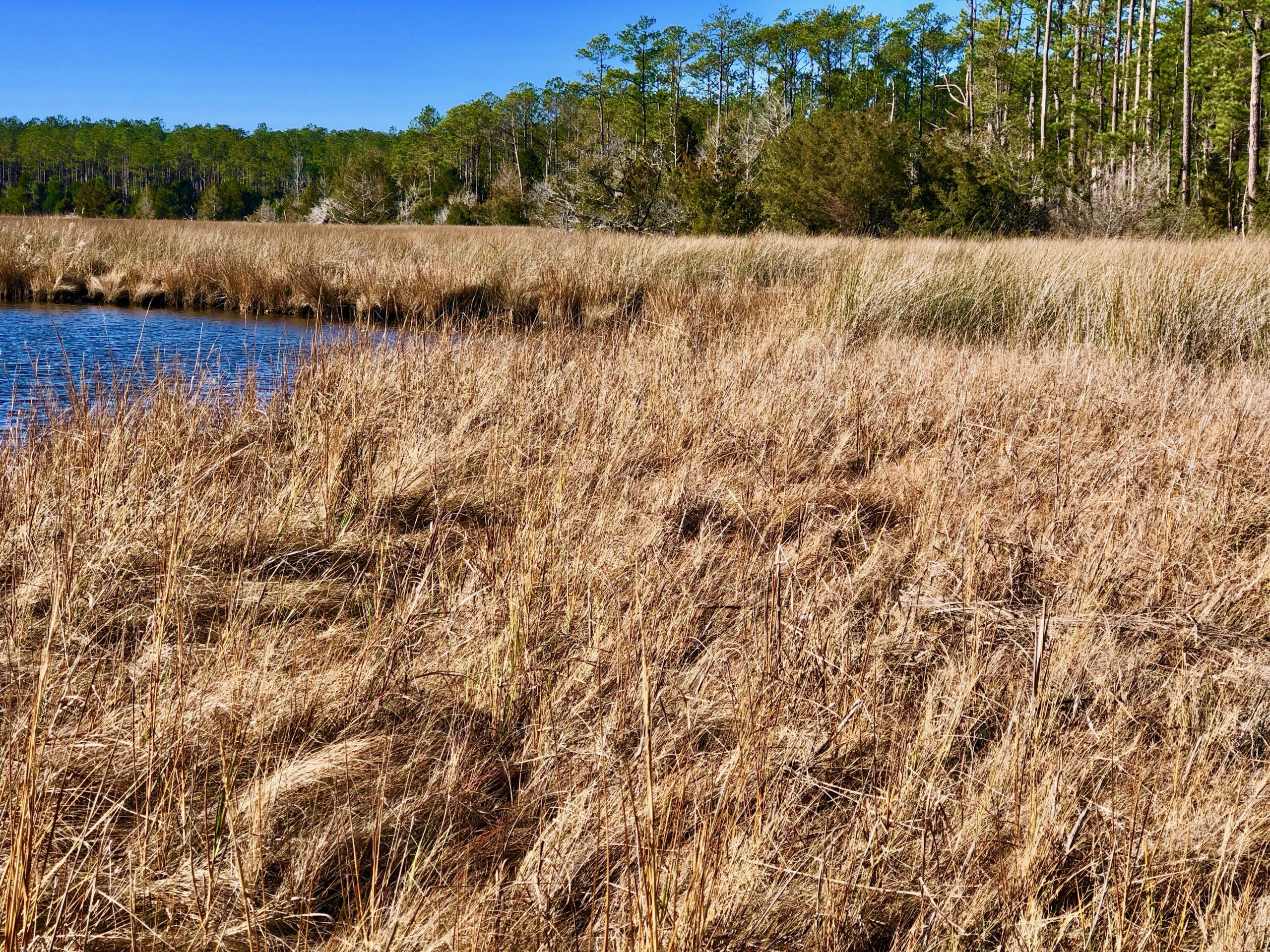 Hunting tract for sale in Hyde County, NC