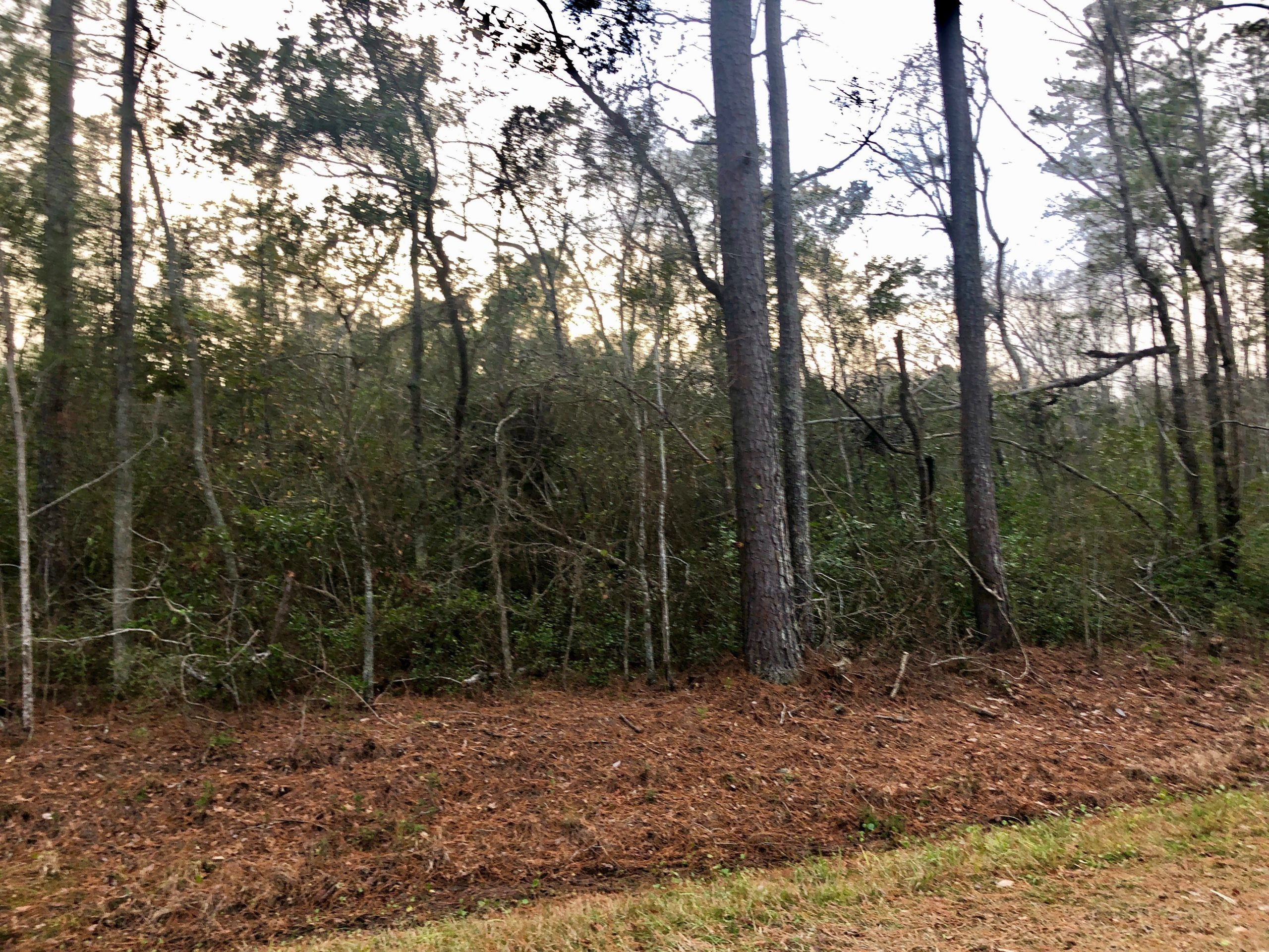 Timberland/Hunting Tract For Sale in Washington, NC