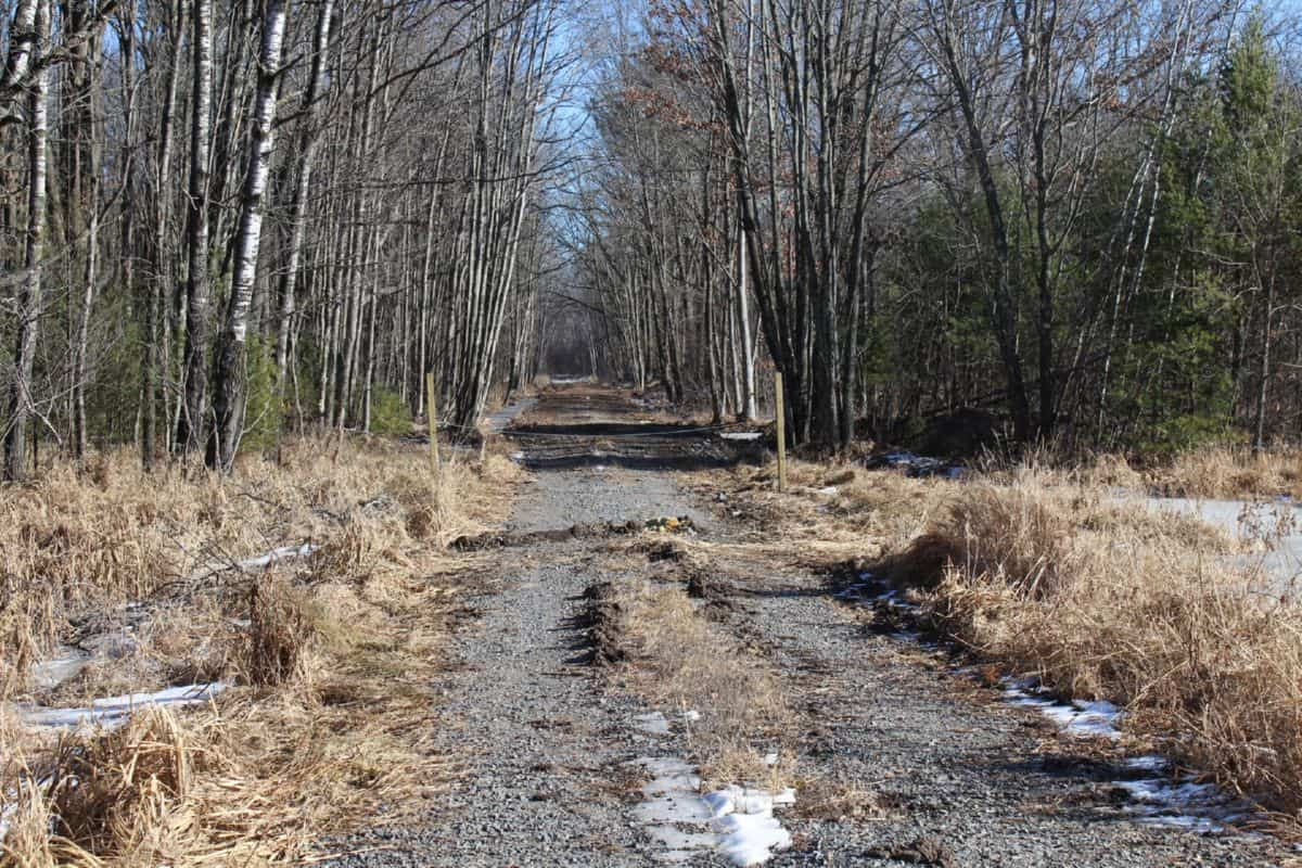 Mostly Wooded Hunting Land in Wood County WI