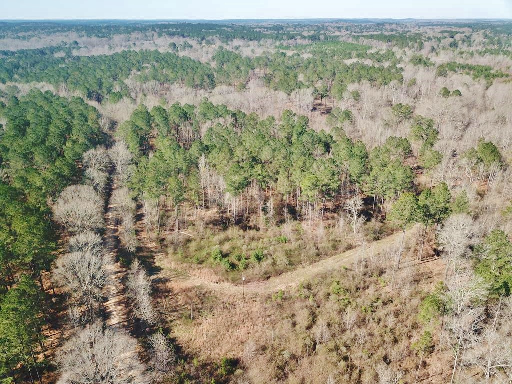 115 Acre Hunting and Timber Land for Sale, Jefferson Co., MS