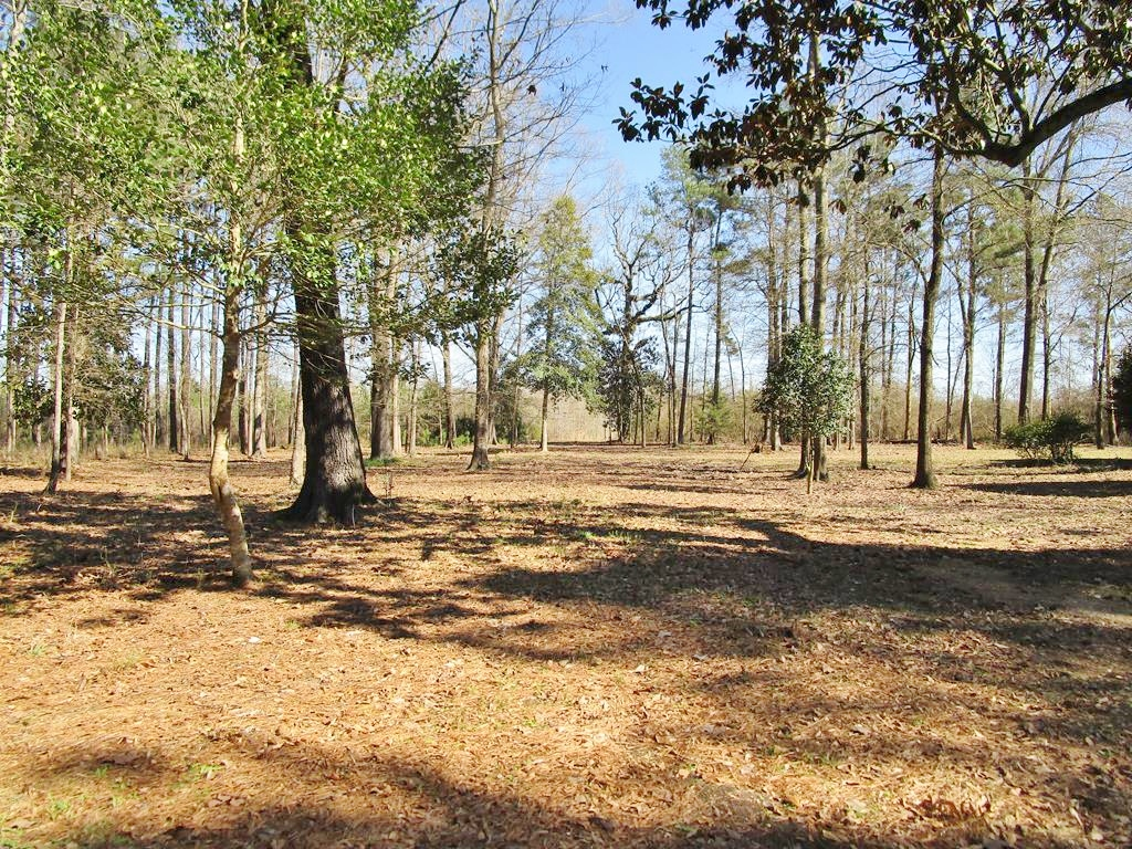 148 Acres Hunting Timberland for Sale Brookhaven, MS