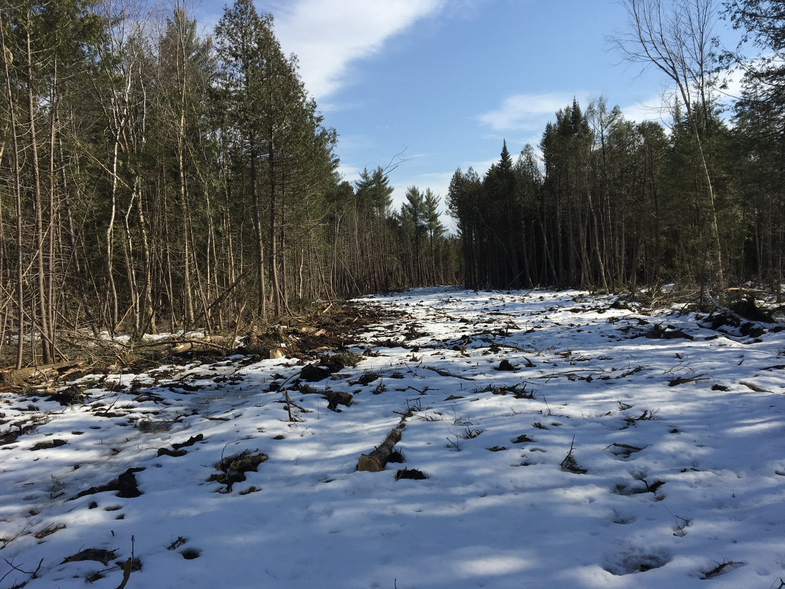 68 Acres Well Septic Electric and Deer