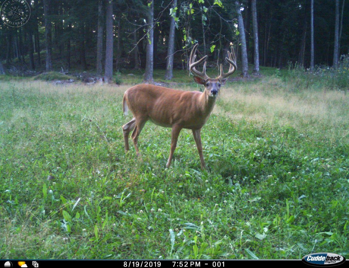 Quality Hunting Parcel in Shawano County WI