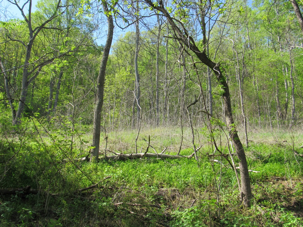 Mountain Property With Potential Home Site For Sale