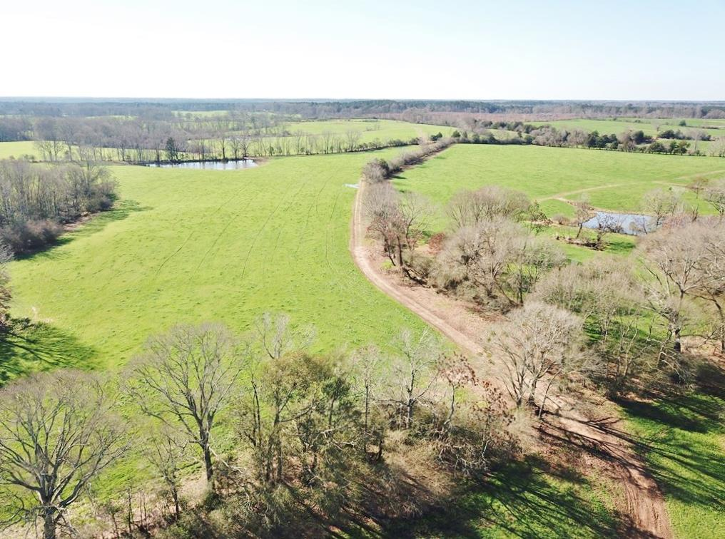 255 Acre Large Pastureland Tract for Sale Amite County, MS
