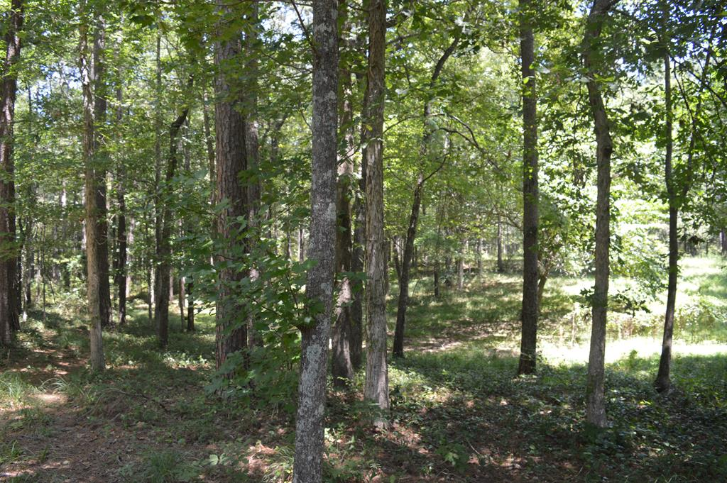 Timber Land For Sale Amite County