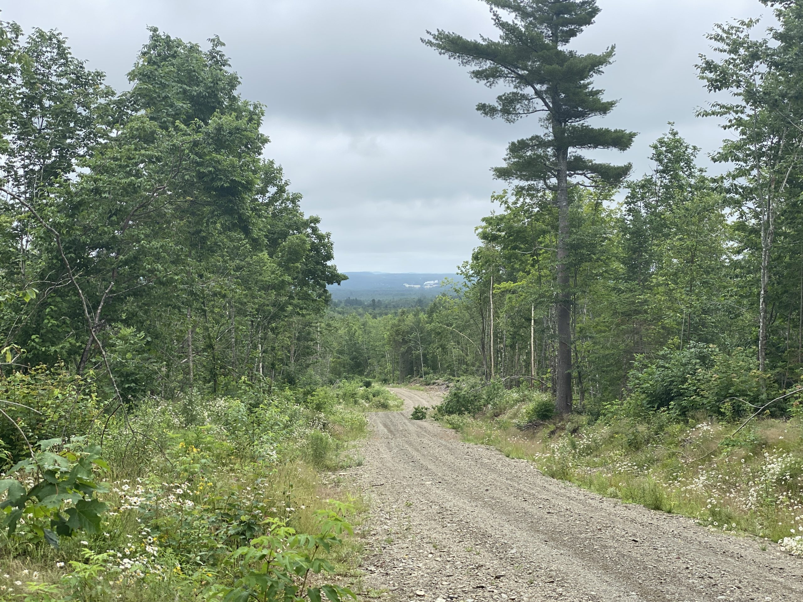 Land for Sale in Ludlow, ME