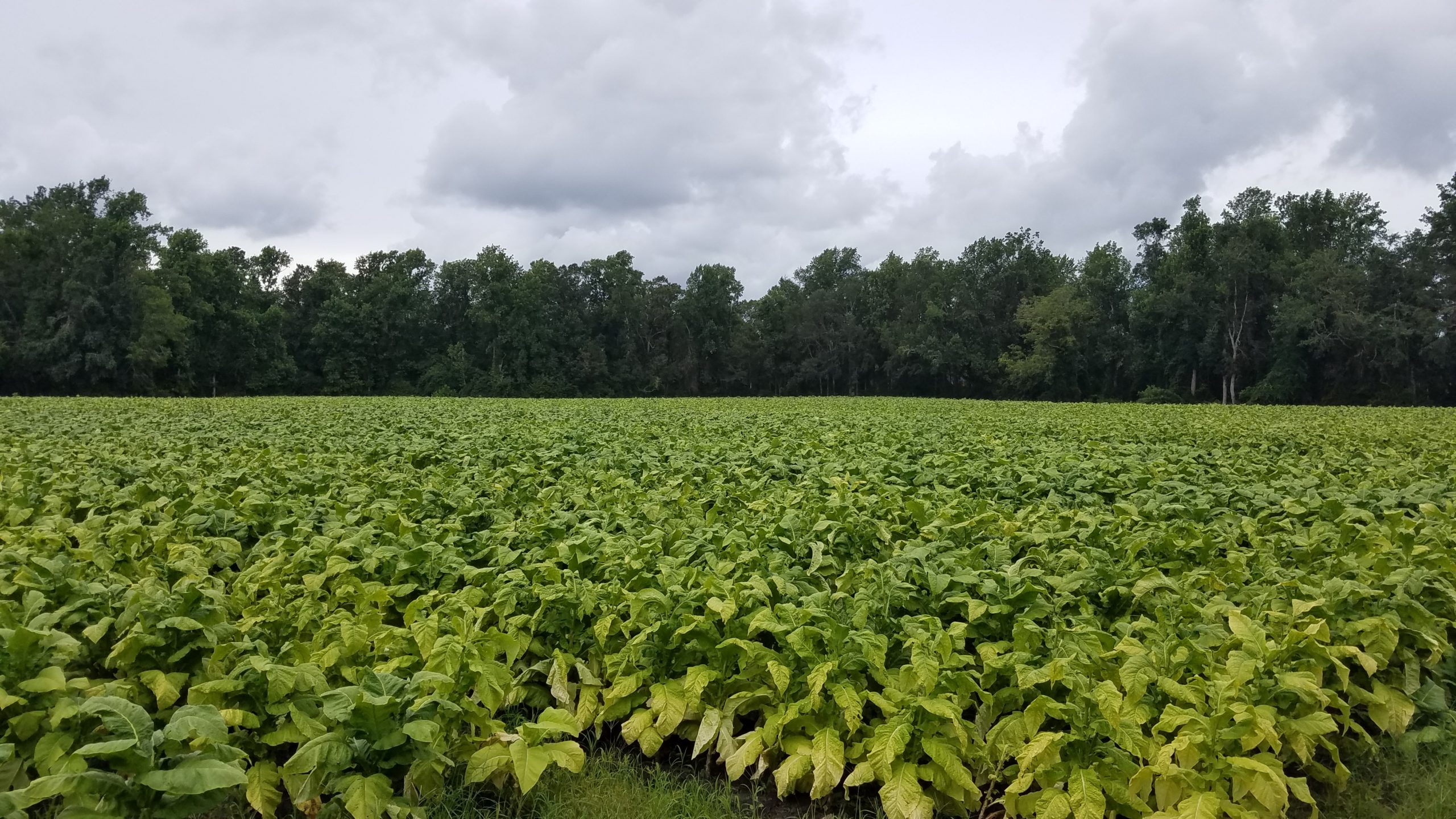 Farm and Timberland for sale in Pamlico Co., NC