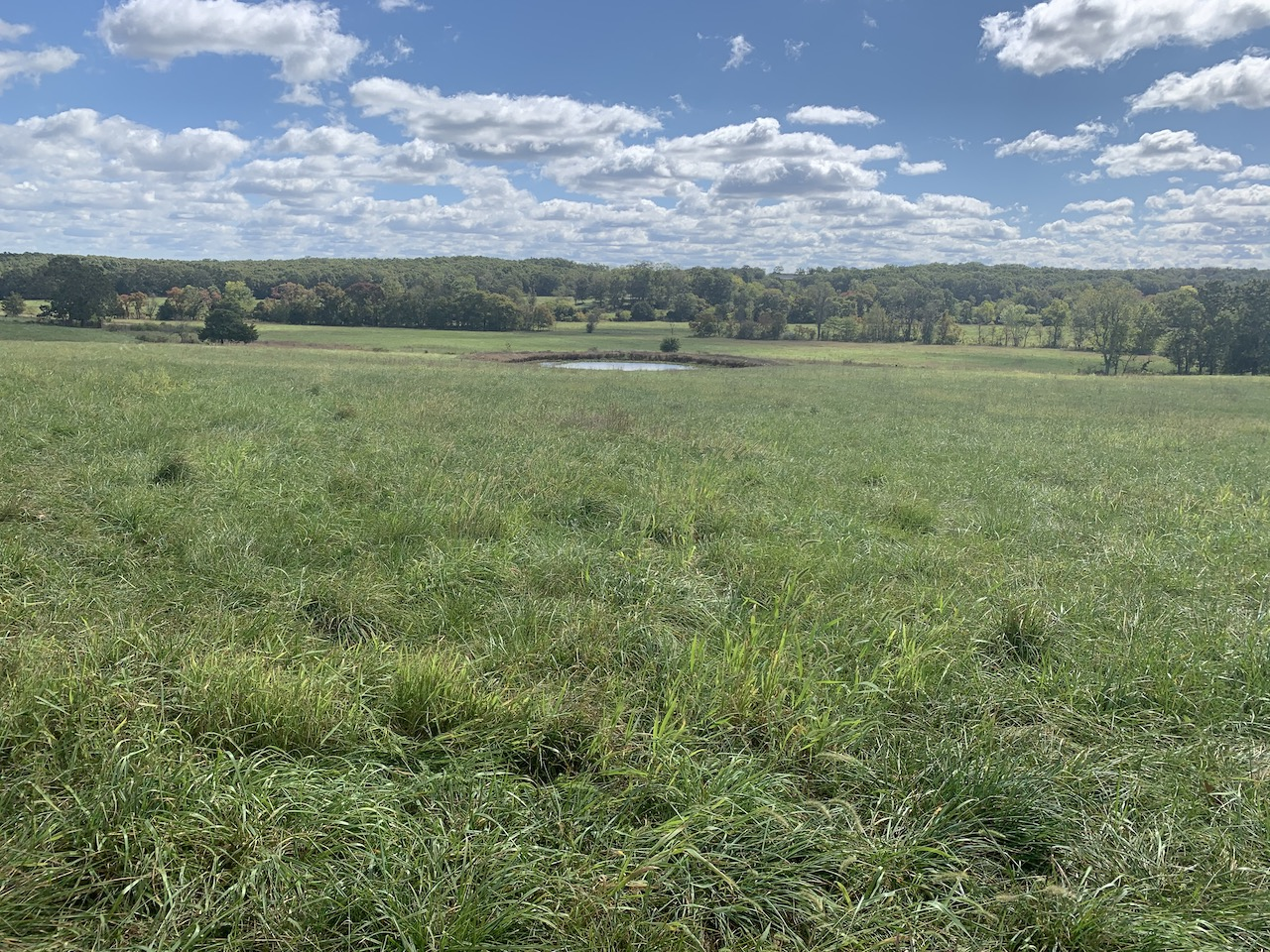 Land in Southern Missouri For Sale – Wildlife Galore!
