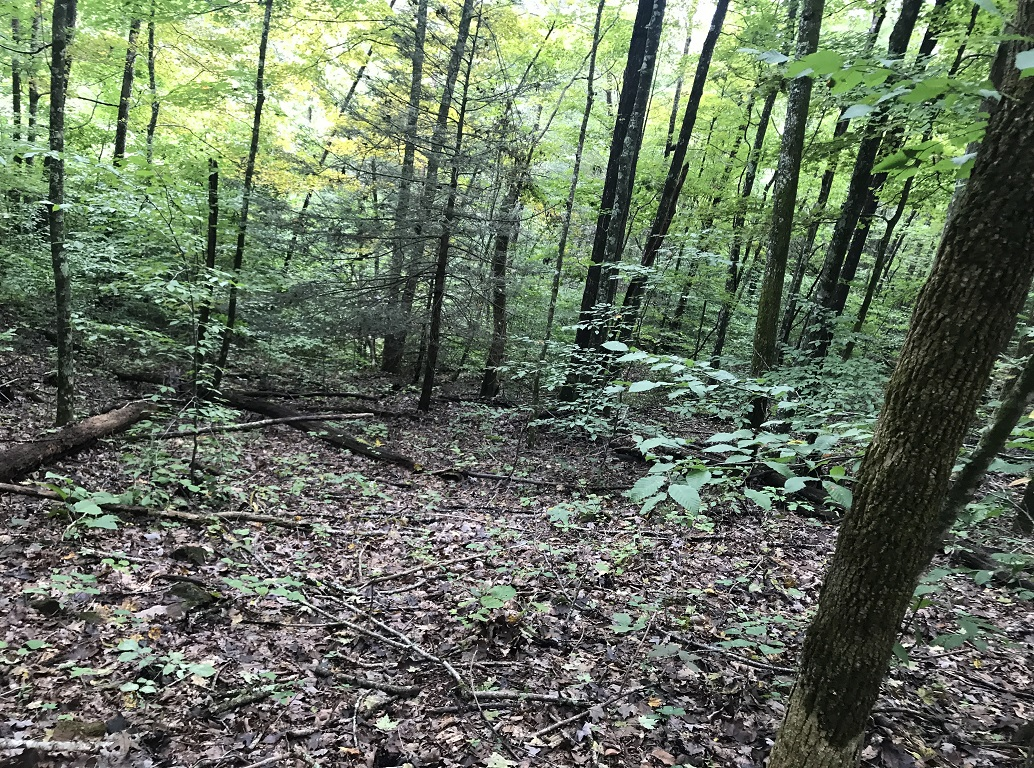 Tennessee Land for Sale At Auction Hancock County TN