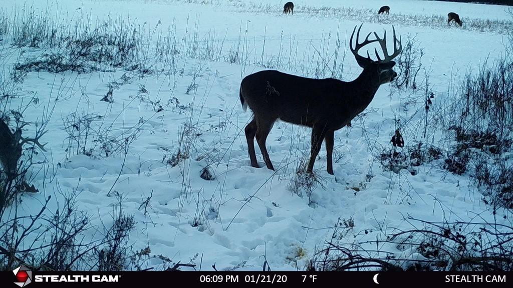 68.14 Acre Juneau County Deer, Turkey & Duck Hunting Haven