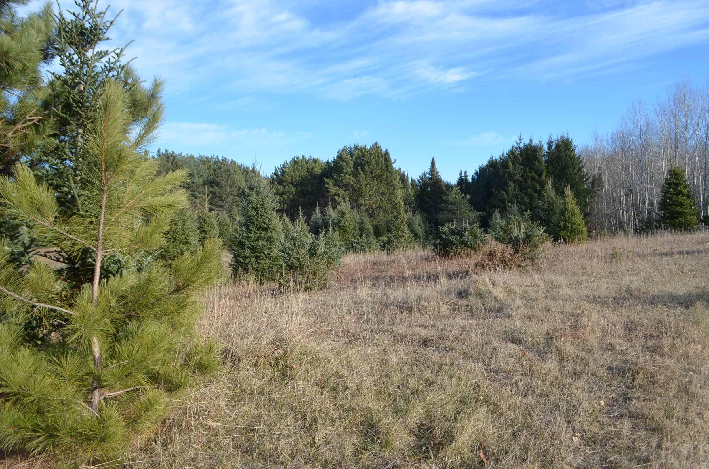 60 Acres in Marathon County WI